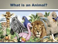 What is an Animal PPt