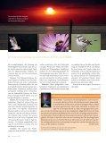 Wunder - Seite 3