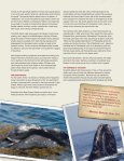 Tale of a Whale (and Why It Can Be Told) - Smithsonian Education - Page 5