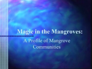 Magic in the Mangroves - LFIP