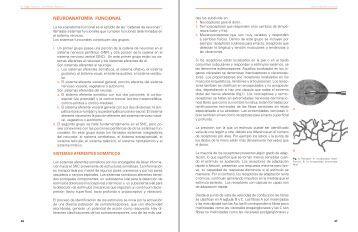 NEUROANATOMÍA FUNCIONAL - Buscar Docente!