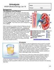18 Urinalysis - Student.pdf - haspi