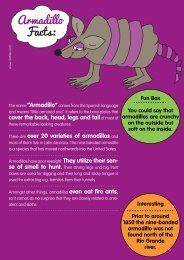 Armadillo Facts: - Motlies