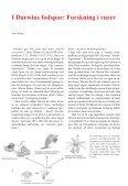 Amerikansk brakvandskrabbe - Page 2