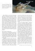 Amerikansk brakvandskrabbe - Page 5
