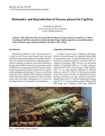 Husbandry and Reproduction of Varanus glauerti in Captivity