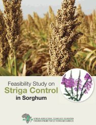 Feasibility Study on Striga Control in Sorghum - African Agricultural ...