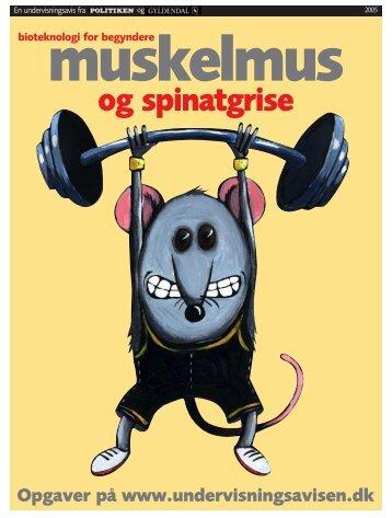 Muskelmus - Gyldendal
