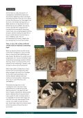 Download a copy of the full report - Animal Aid - Page 7