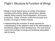 Flight I: Structure & Function of Wings - Biology Courses Server