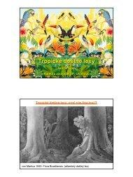 Tropické deštné lesy - Katedra zoologie