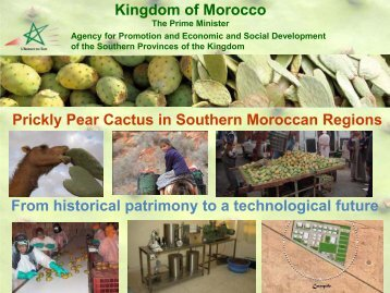 Kingdom of Morocco Prickly Pear Cactus in Southern Moroccan ...
