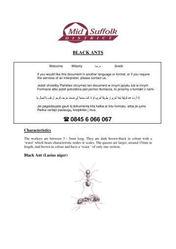 Black Ants (PDF, 125Kb)