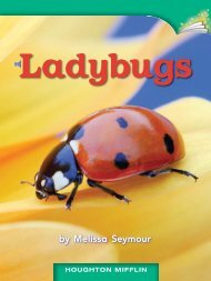 Lesson 24:Ladybugs