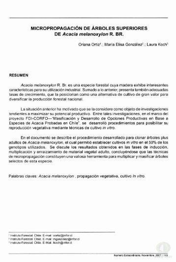 MICROPROPAGACIÓN DE ÁRBOLES SUPERIORES ... - Inicio - Infor