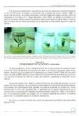 MICROPROPAGACIÓN DE ÁRBOLES SUPERIORES ... - Inicio - Infor - Page 7