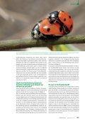 Negatieve gevolgen van Veelkleurig Aziatisch ... - Natuurpunt - Page 5