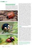 Negatieve gevolgen van Veelkleurig Aziatisch ... - Natuurpunt - Page 6