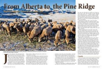 Bighorn Sheep Relocation a Success - Nebraska Game and Parks ...