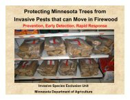 Protecting Minnesota Trees from Invasive Pests that can Move in ...