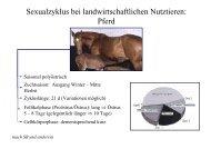 Sexualzyklus bei landwirtschaftlichen Nutztieren: Pferd