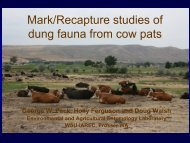 Mark/Recapture studies of dung fauna from cow pats