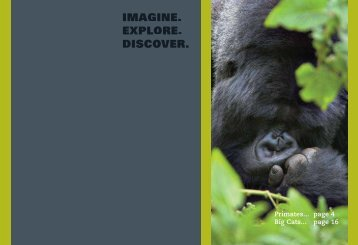 IMAGINE. EXPLORE. DISCOVER. - World Primate Safaris