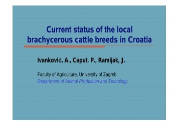 Current status of the local brachycerous cattle breeds in Croatia