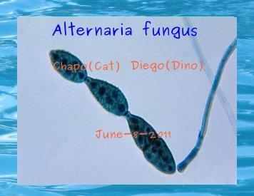 Alternaria fungus