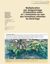 Multiplication par drageonnage d'Isoberlinia doka et I. tomentosa au ...