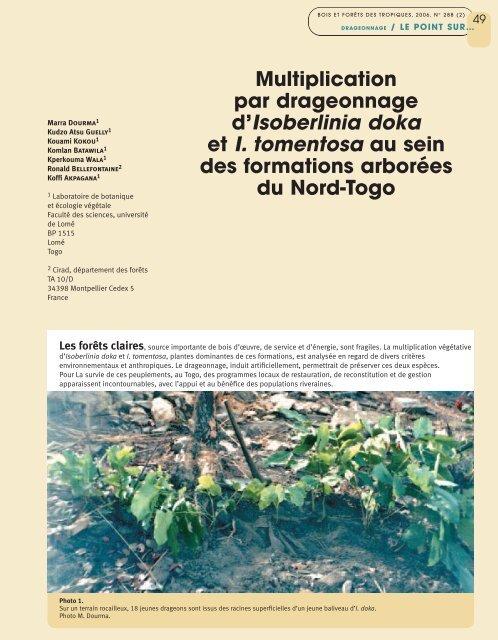 Multiplication par drageonnage d'Isoberlinia doka et I. tomentosa au ...