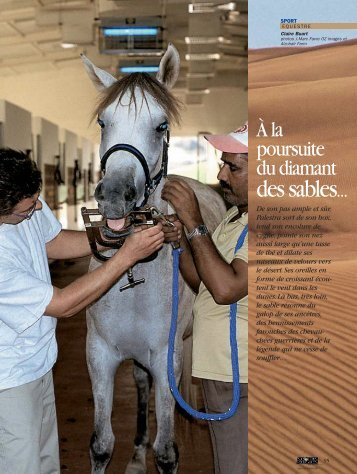 Le pur sang arabe - Magazine Sports et Loisirs