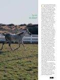 Le pur sang arabe - Magazine Sports et Loisirs - Page 3