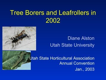 Tree Borers and Leafrollers in 2002 - Utah State Horticultural ...