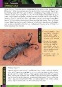 Garden Entomology - Royal Entomological Society - Page 5