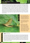 Garden Entomology - Royal Entomological Society - Page 6