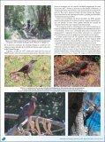 Parque Nacional La Campana, Chile. - Atualidades Ornitológicas - Page 2