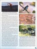 Parque Nacional La Campana, Chile. - Atualidades Ornitológicas - Page 3