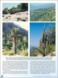 Parque Nacional La Campana, Chile. - Atualidades Ornitológicas - Page 4