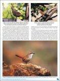 Parque Nacional La Campana, Chile. - Atualidades Ornitológicas - Page 5