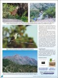 Parque Nacional La Campana, Chile. - Atualidades Ornitológicas - Page 6