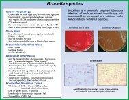 Brucella species - Wadsworth Center