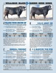 willabar long yearling bulls - Page 3