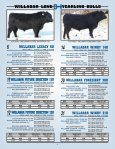 willabar long yearling bulls - Page 5