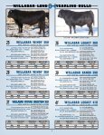 willabar long yearling bulls - Page 6