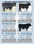 willabar long yearling bulls - Page 7