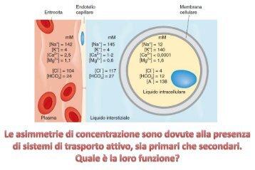 lezione fisiologia umana 12-03-2013 - Omero