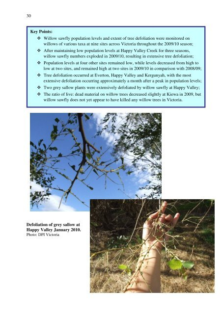 Willow Sawfly Management Trials - Weeds Australia