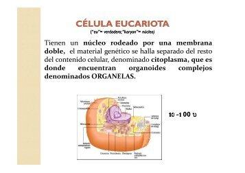 Celula eucariota.Organelas