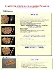 ülkemizde tarımı yapılan buğdaylar